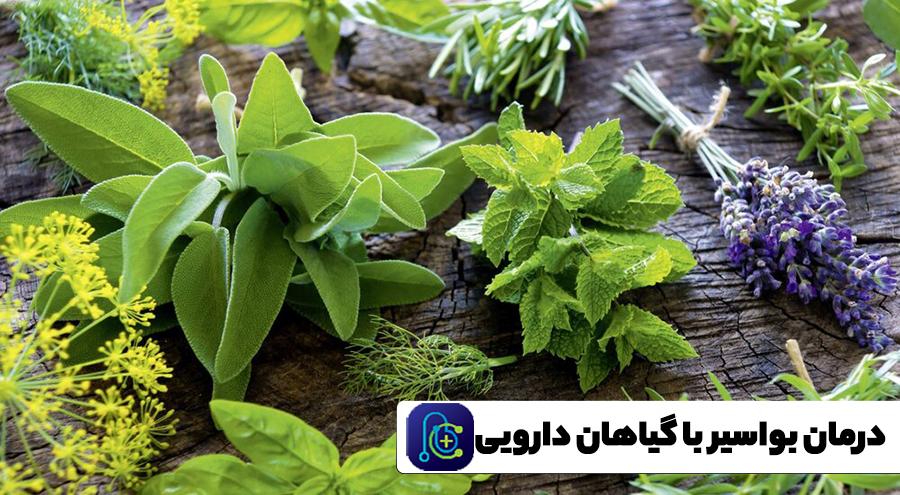 درمان قطعی بواسیر با گیاهان دارویی